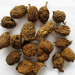 Arrowshaped Tinospora Root Extract